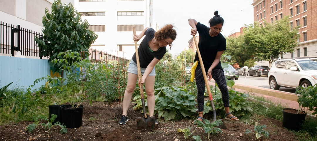 GW students working on campus garden